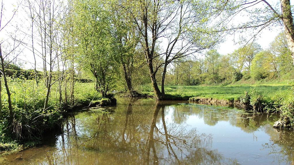 Corcoué-sur-Logne - Rivière La Logne (44650)