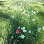 Fleurs espaces verts Sud Retz Atlantique