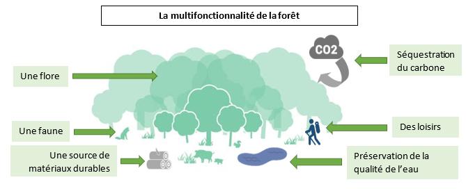 Multifonctionnalité de la forêt Sud Retz Atlantique